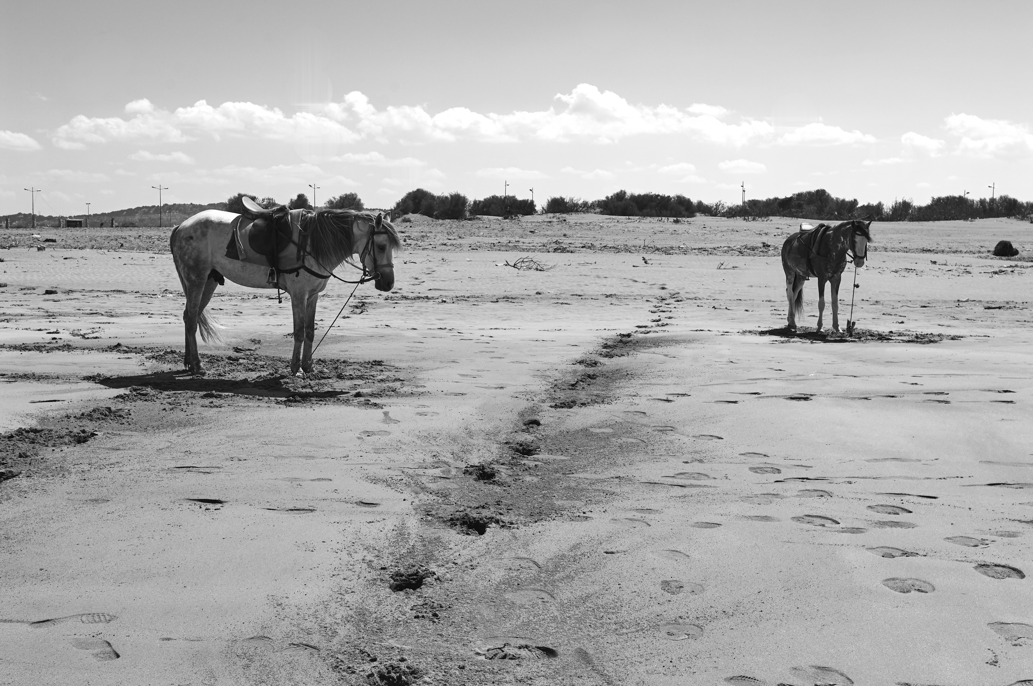 Essaouira07_0130