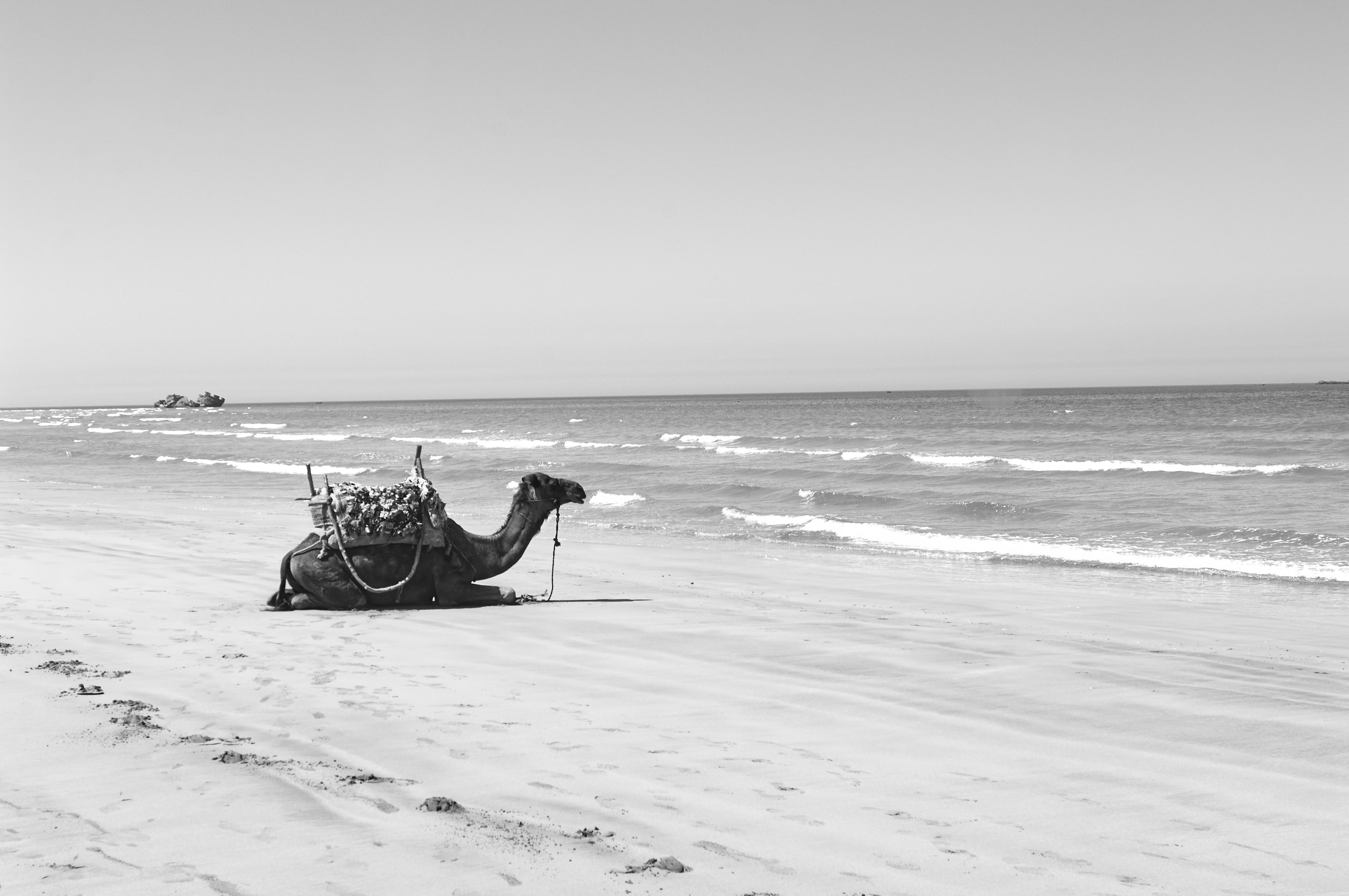 Essaouira07_0141