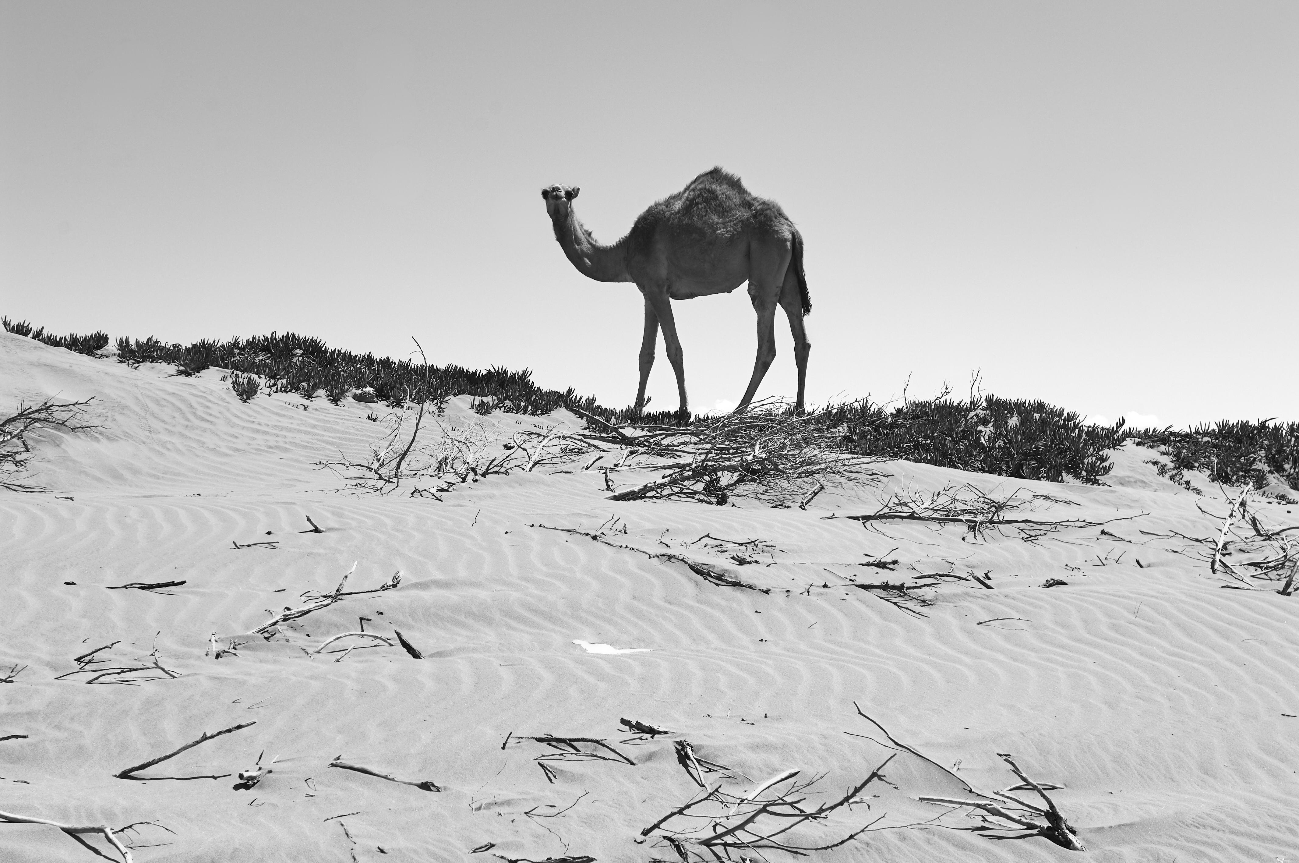 Essaouira07_0193