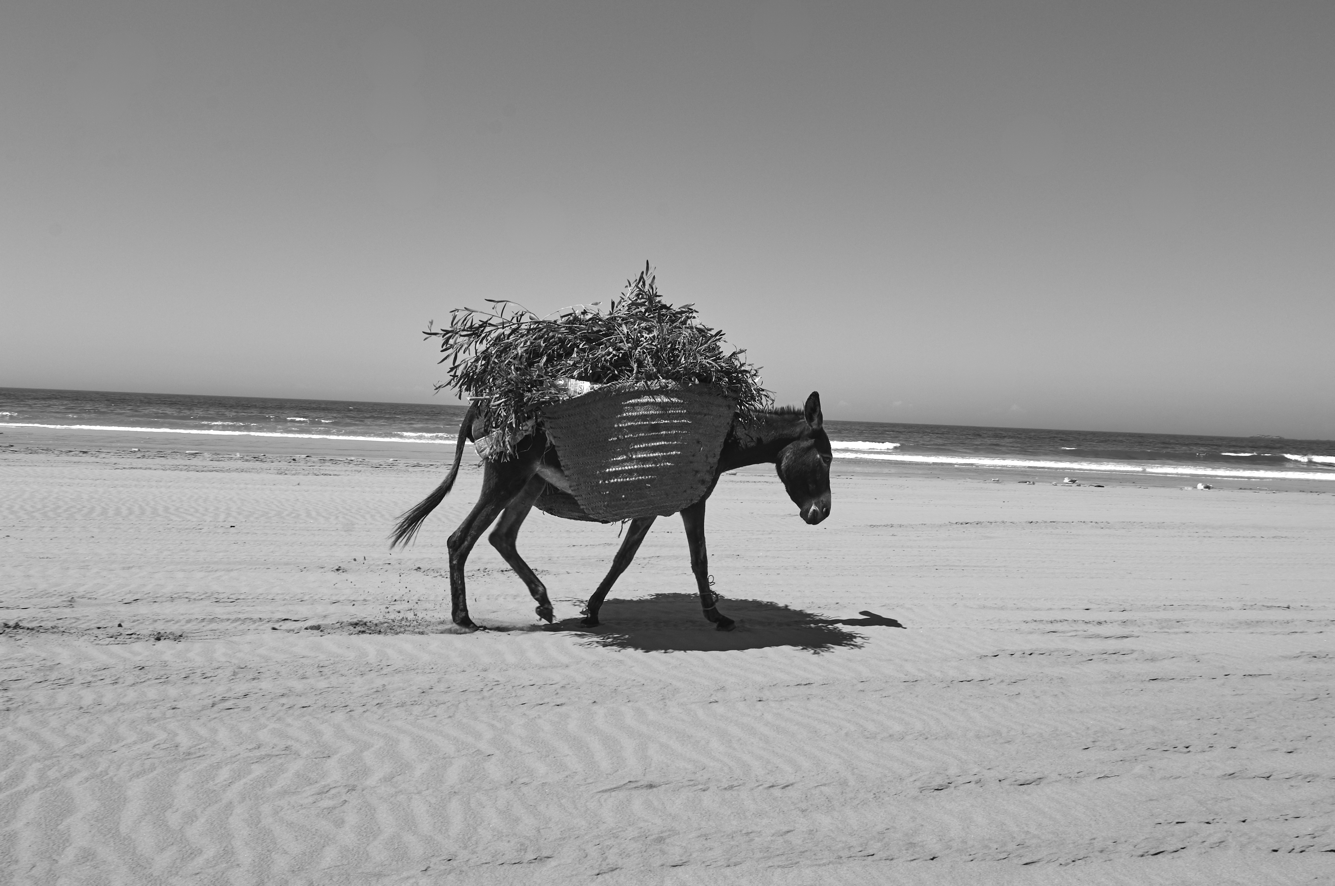 Essaouira07_0234
