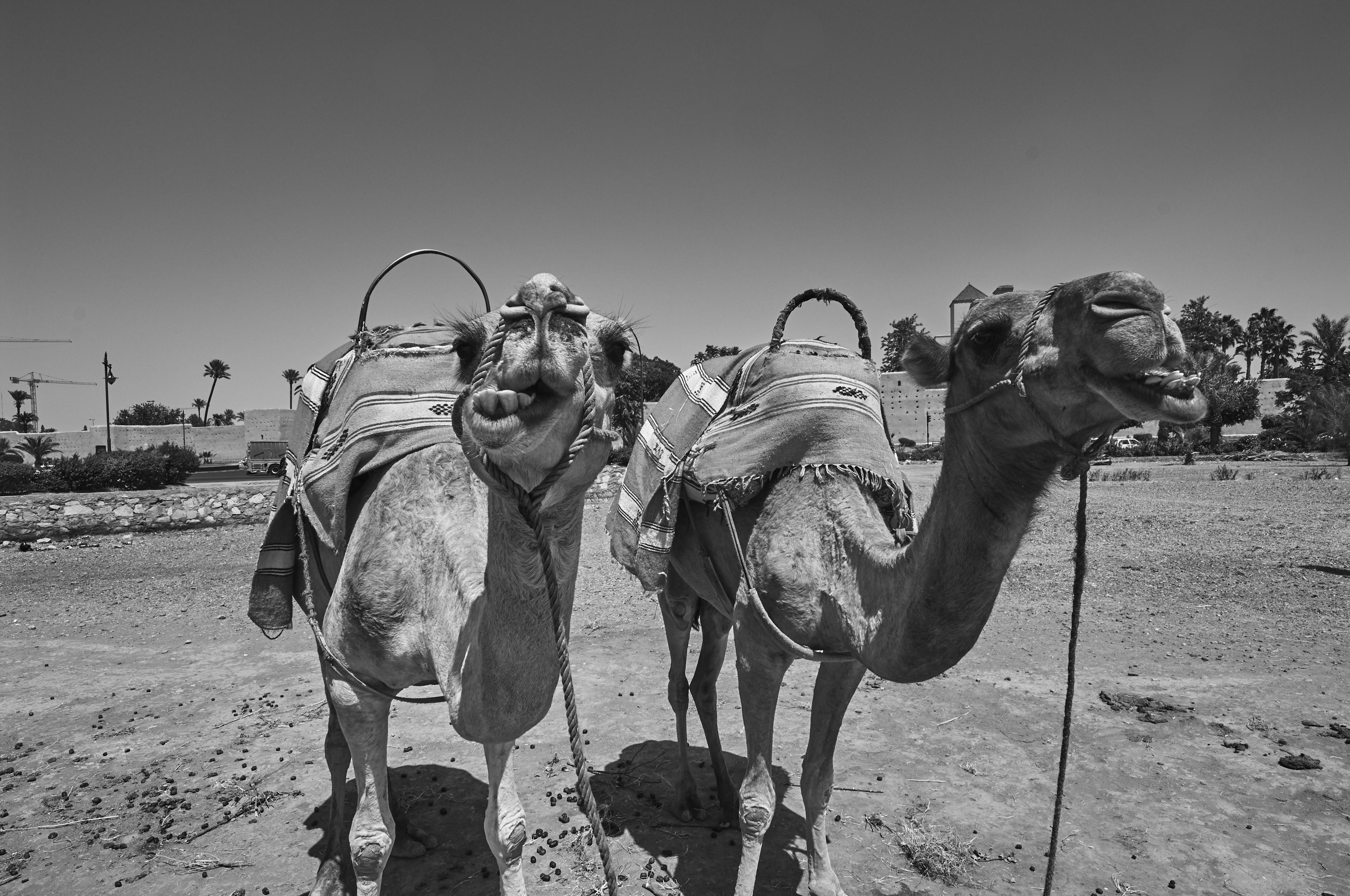 Marrakech07_0056